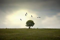 Ailes au-dessus de l'arbre Photo libre de droits