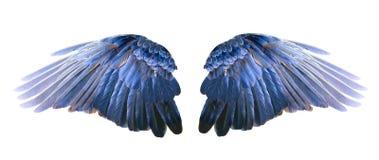 Ailes bleues photo libre de droits