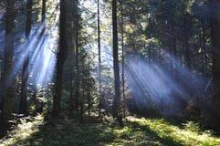 Ailes de lumière Photographie stock libre de droits