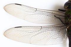 Ailes de mouche de dragon Photographie stock