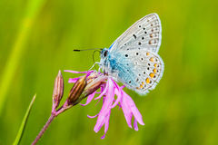 Ailes de papillon Photographie stock libre de droits
