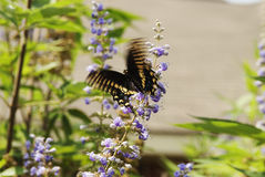 Ailes de papillon dans le mouvement Photo stock