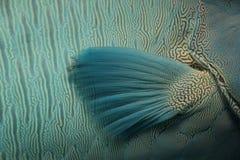 ailette Photo libre de droits