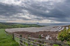 Ailsa Craig από έναν τομέα αγροτών στο νότιο Ayrshire Σκωτία στοκ εικόνα