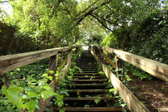 Aim for the Top. Secluded staircase surrounded by greenery Stock Photos