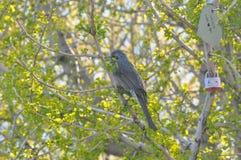 Aimez le casier et un oiseau sur l'arbre Photos stock