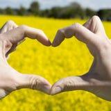 Aimez les mains de forme - coeur sur le champ jaune et le ciel bleu Photo stock
