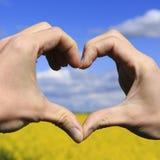 Aimez les mains de forme - coeur sur le champ jaune et le ciel bleu Image libre de droits
