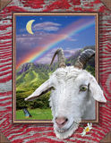 Ain't Life Grand. Illustration of goat with senic background, framed with red antique wood Royalty Free Stock Image