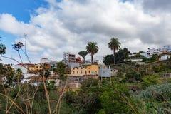 Aincient Dragon Tree em Icod de los Vinos, Tenerife fotos de stock royalty free