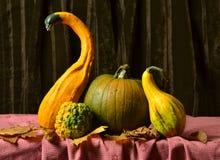Ainda abóboras da vida na tabela nas folhas de outono Imagens de Stock