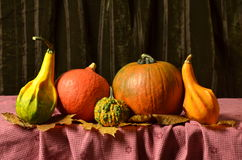Ainda abóboras da vida na tabela nas folhas de outono Fotos de Stock Royalty Free