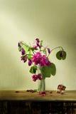 Ainda arte da vida com flor cor-de-rosa Fotos de Stock Royalty Free