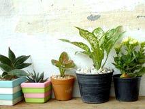Ainda as plantas naturais da casa da vida na textura de madeira do fundo com espaço copiam Imagens de Stock