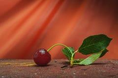Ainda cena do sumário da cereja da vida Foto de Stock