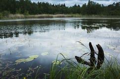 Ainda costa do lago com grama e senão imagens de stock royalty free