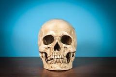 Ainda crânio humano branco da vida na tabela de madeira Foto de Stock