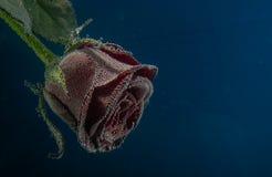 Ainda flores da vida sob a água imagens de stock