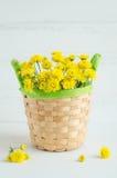 Ainda flores do amarelo do crisântemo da vida Fotos de Stock Royalty Free
