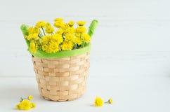 Ainda flores do amarelo do crisântemo da vida Foto de Stock Royalty Free