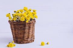 Ainda flores do amarelo do crisântemo da vida Imagens de Stock Royalty Free