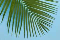 Ainda folha de palmeira da foto de cor da vida na opinião superior fl do fundo azul Fotografia de Stock