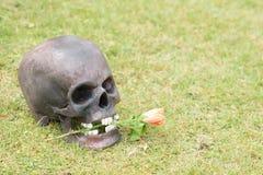 Ainda fotografia da arte da vida no crânio na grama verde Imagens de Stock