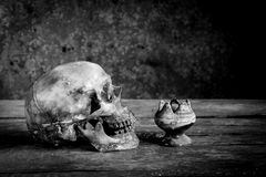 Ainda fotografia preto e branco da vida com os crânios humanos na madeira Imagem de Stock Royalty Free