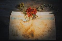 Ainda gerbera seco da flor do envelope da vida Imagens de Stock Royalty Free