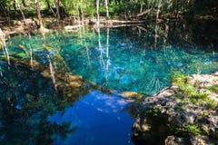 Ainda lago na floresta tropical, paisagem natural Fotos de Stock