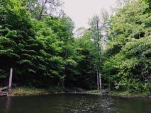 Ainda madeiras da beira do lago Fotos de Stock Royalty Free