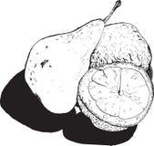 Ainda, metades da pera e do limão, qualit desenhado à mão dos gráficos do estilo Imagem de Stock