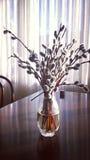 Ainda o interior da vida, salgueiro floresce no vaso de vidro Fotografia de Stock
