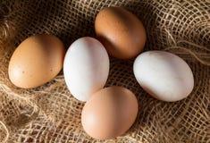Ainda ovos da vida no pano de saco Foto de Stock