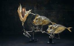 Ainda peixes da vida e milho colorido Fotos de Stock Royalty Free