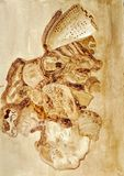 Ainda pintura do alimento da vida dos escudos usando o café imagem de stock royalty free