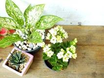 Ainda plantas naturais da casa da vida na textura de madeira do fundo Fotografia de Stock