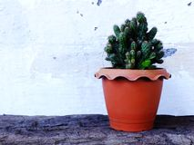 Ainda plantas naturais do cacto da vida no fundo de madeira textured Foto de Stock