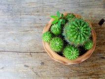 Ainda plantas naturais do cacto da vida no fundo de madeira textured Imagem de Stock Royalty Free