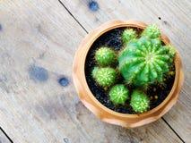 Ainda plantas naturais do cacto da vida no fundo de madeira textured Fotografia de Stock Royalty Free
