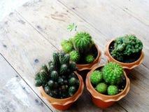 Ainda plantas naturais do cacto da vida no fundo de madeira textured Fotos de Stock