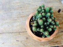 Ainda plantas naturais do cacto da vida no fundo de madeira textured Foto de Stock Royalty Free