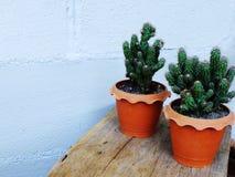 Ainda plantas naturais do cacto da vida no fundo de madeira textured Fotografia de Stock