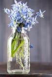 Ainda ramalhete da vida de flores azuis na garrafa transparente Foto de Stock Royalty Free