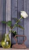 Ainda rosa do branco da vida em um vaso no fundo escuro Imagem de Stock