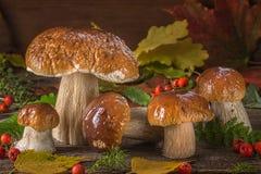 Ainda uma vida bonita dos grandes cogumelos brancos naturais Imagens de Stock