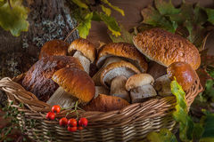 Ainda uma vida bonita dos grandes cogumelos brancos naturais Foto de Stock Royalty Free