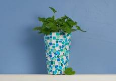 Ainda-vida azul e branca com a hortelã no vaso do mosaico Fotos de Stock