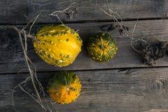 Ainda vida com abóboras de outono em uma tabela de madeira velha Fotografia de Stock