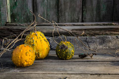 Ainda vida com abóboras de outono em uma tabela de madeira velha Imagem de Stock